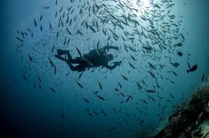 Diving Mali Plavnik Krk Croatia
